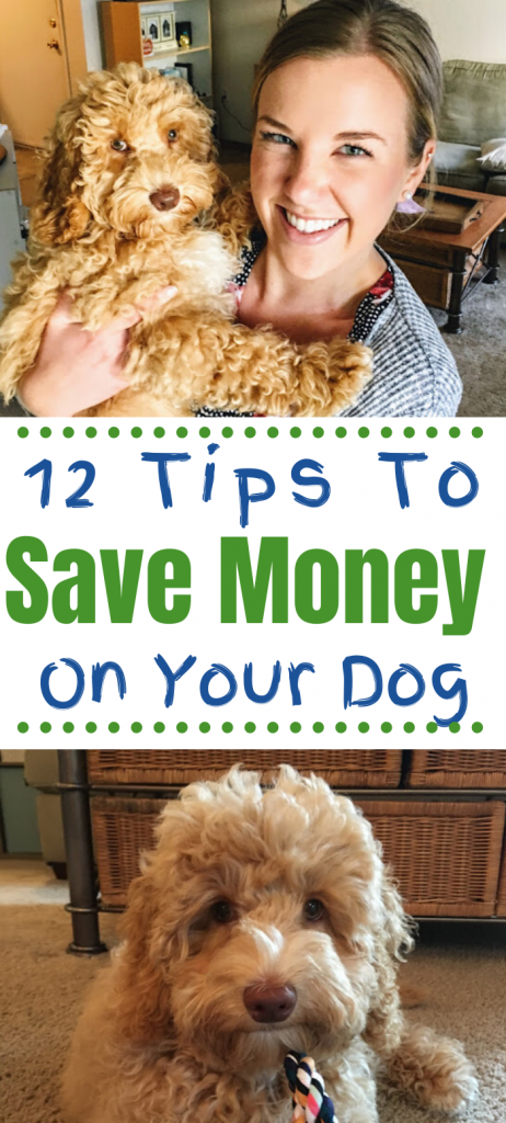 how to save money on your dog